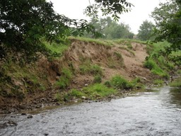 Bank erosion caused by animals